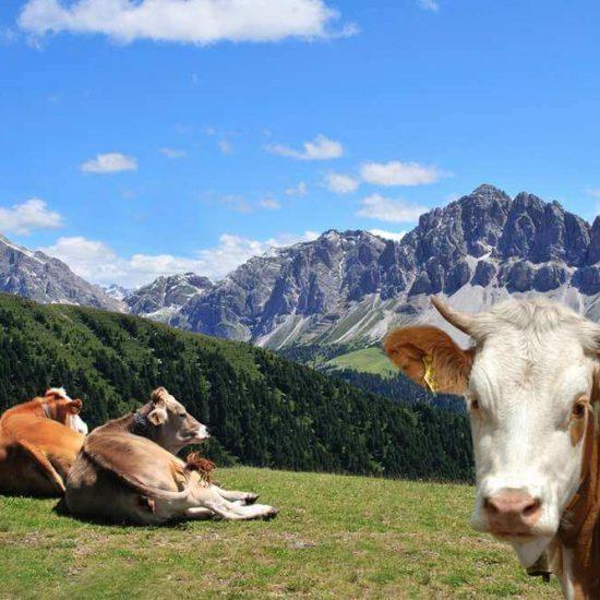 Urlaub auf dem Bauernhof Brixen